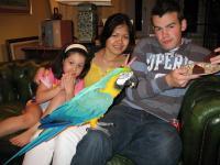 Macaw Breeder In / Near Bangkok? - Plants, Pets & Vets in