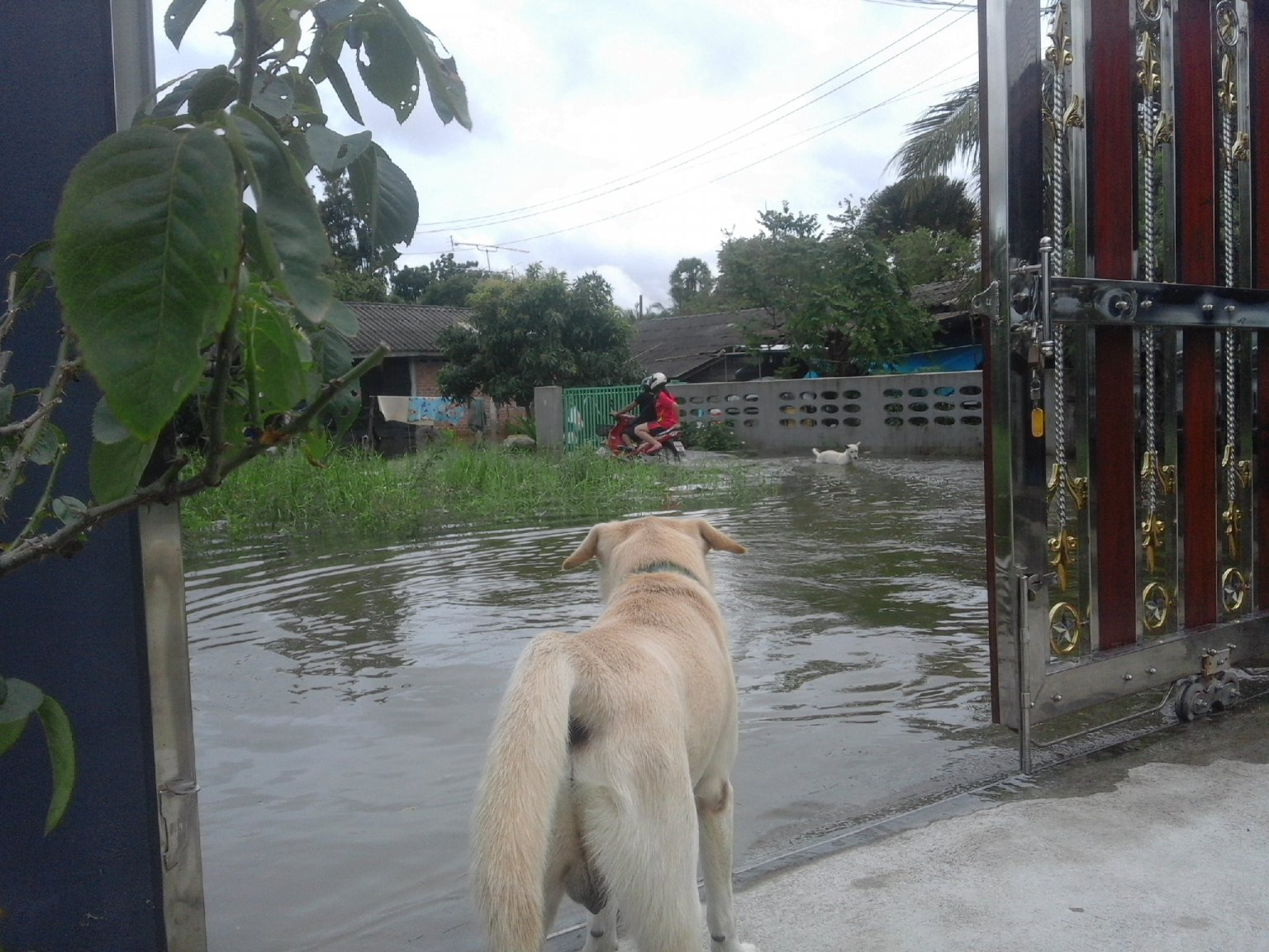max in flood.jpg