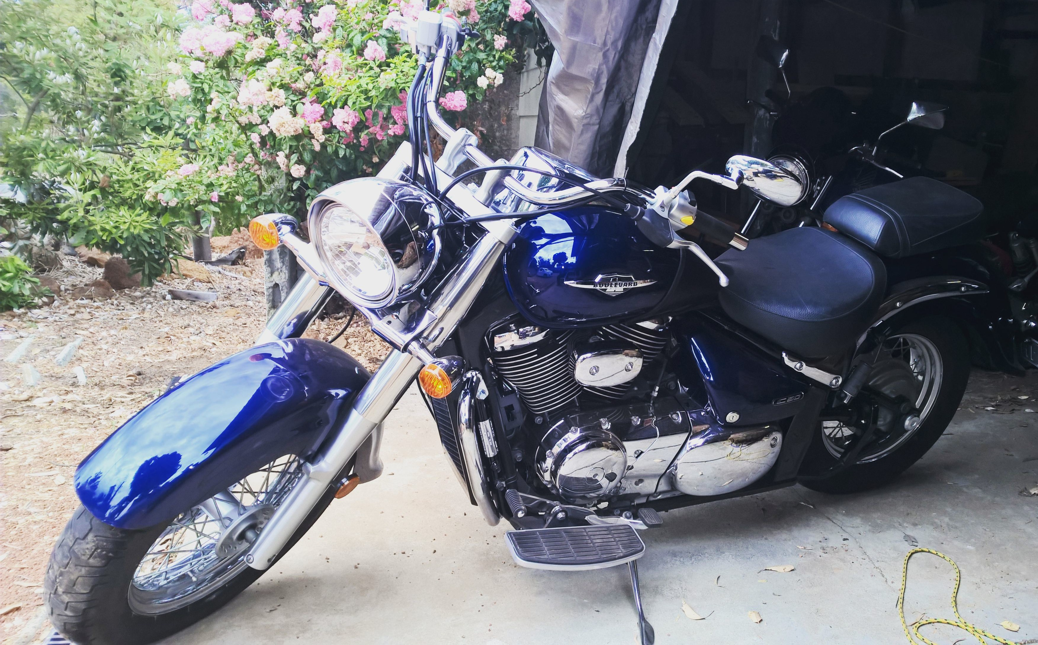 Harley Davidson Street 500 - Motorcycles in Thailand