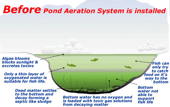 Fish farming large pond lake aeration systems page 2 for Fish pond aerator