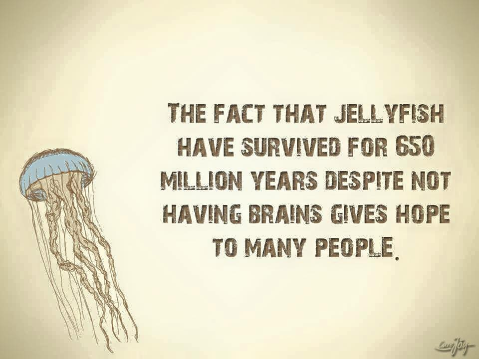 The fact that jellyfish have survived...gives hope to many people..jpg