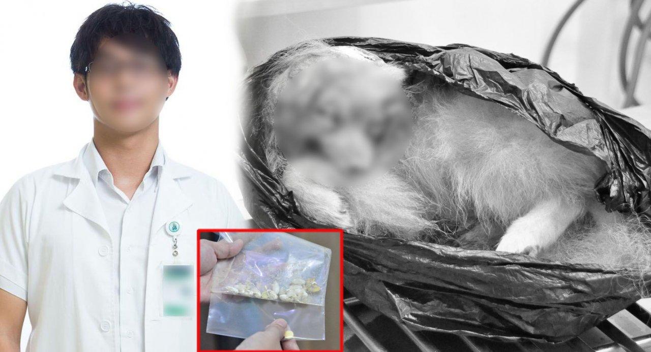 Medical student surrenders, 'denies poisoning dog' - Thailand News