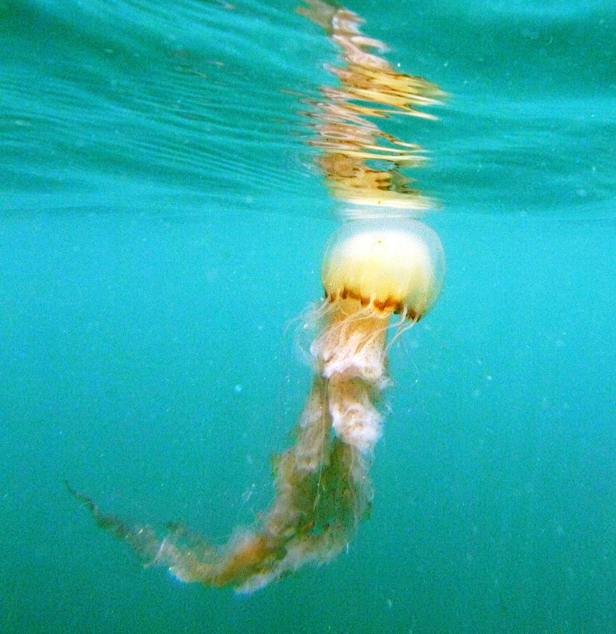 U Wish Jellyfish Angthong Marine...