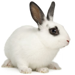 Image-6k-Other-pets-section_white-and-brown-rabbit.jpg