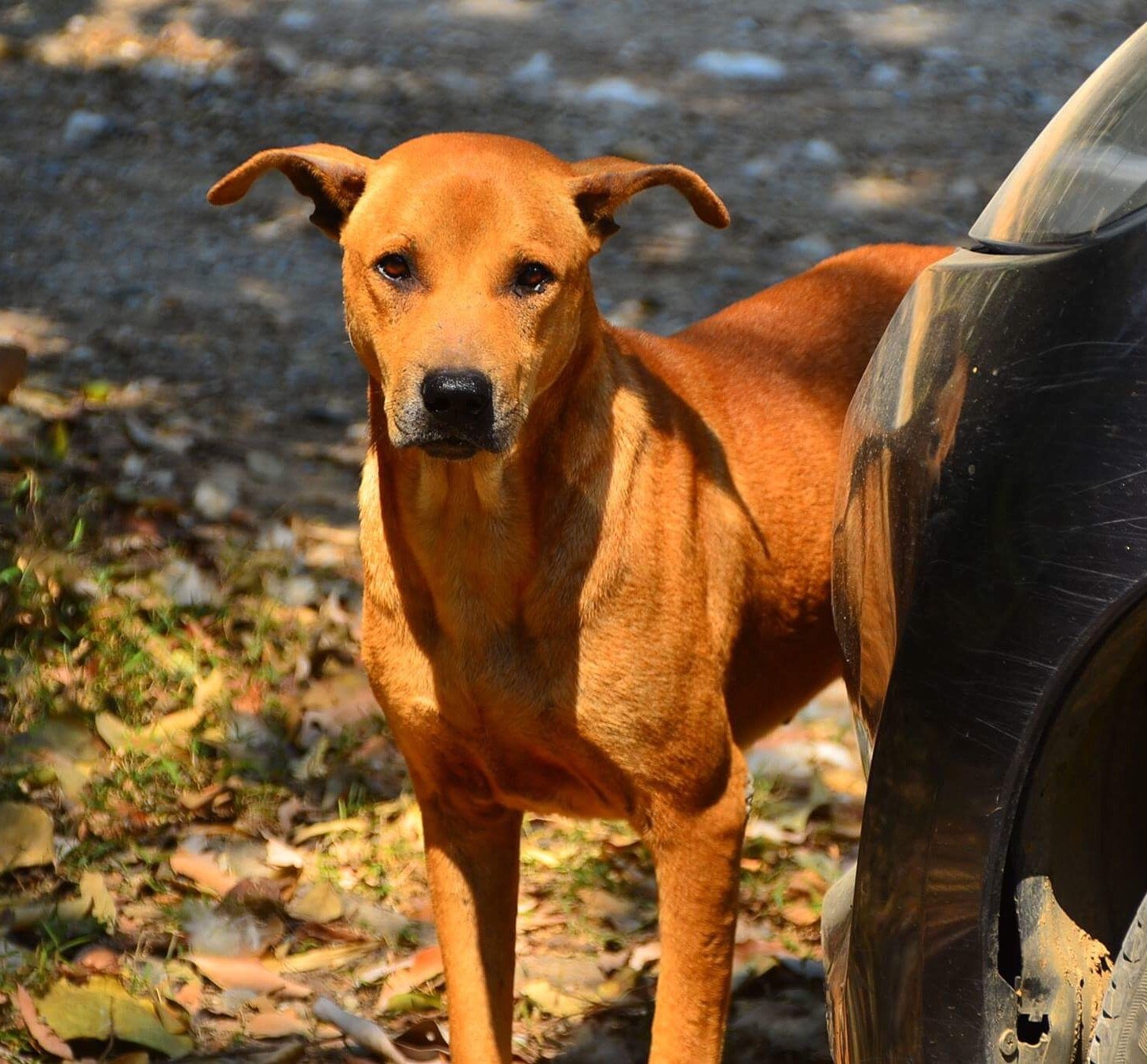 DOG TRACKER GPS    info please? - Plants, Pets & Vets in Thailand