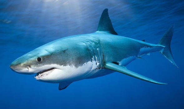 Shark- Getty via Google images.jpg