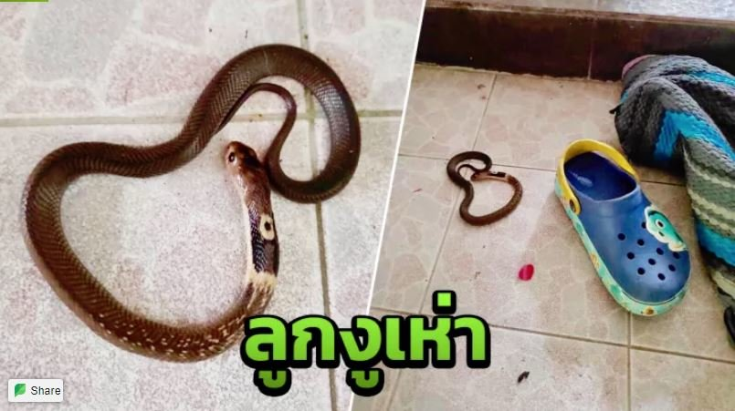 Check Your Shoes! Baby Snakes Could Be Lurking Inside!