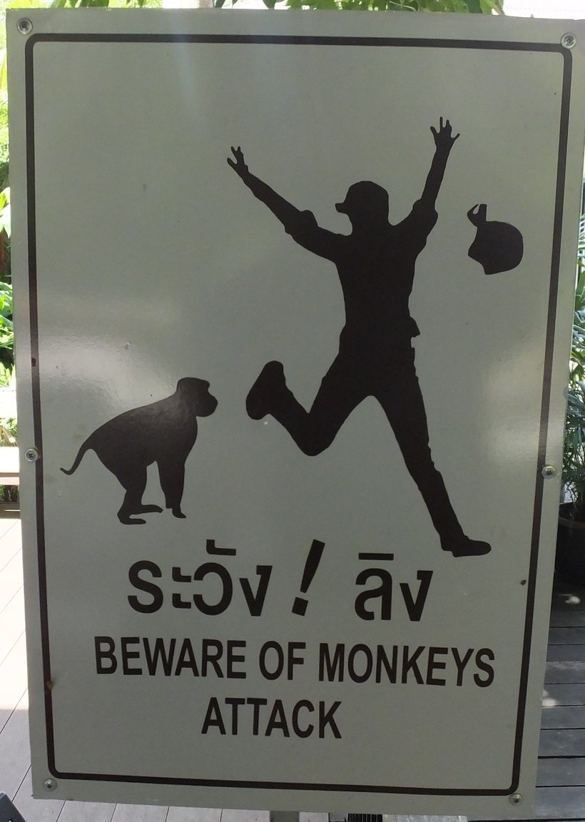 Monkey Attacks.jpg