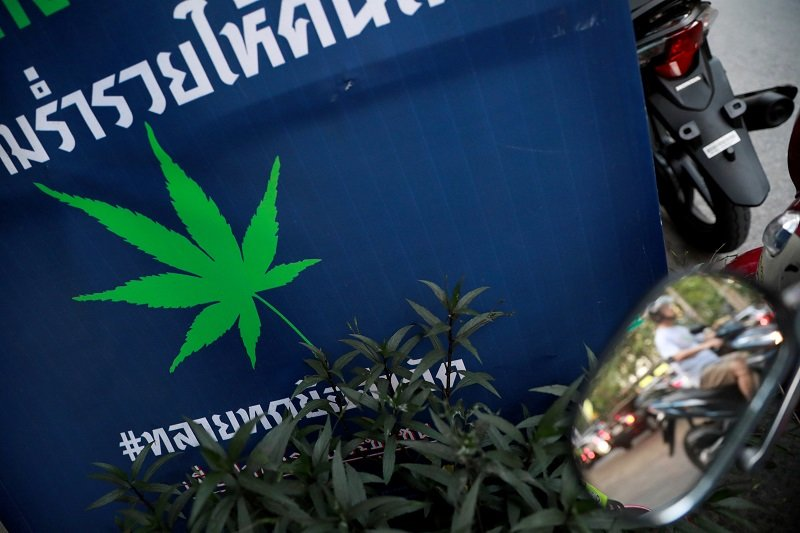 Thais Allowed Six Cannabis Plants Per Household Under Draft Law
