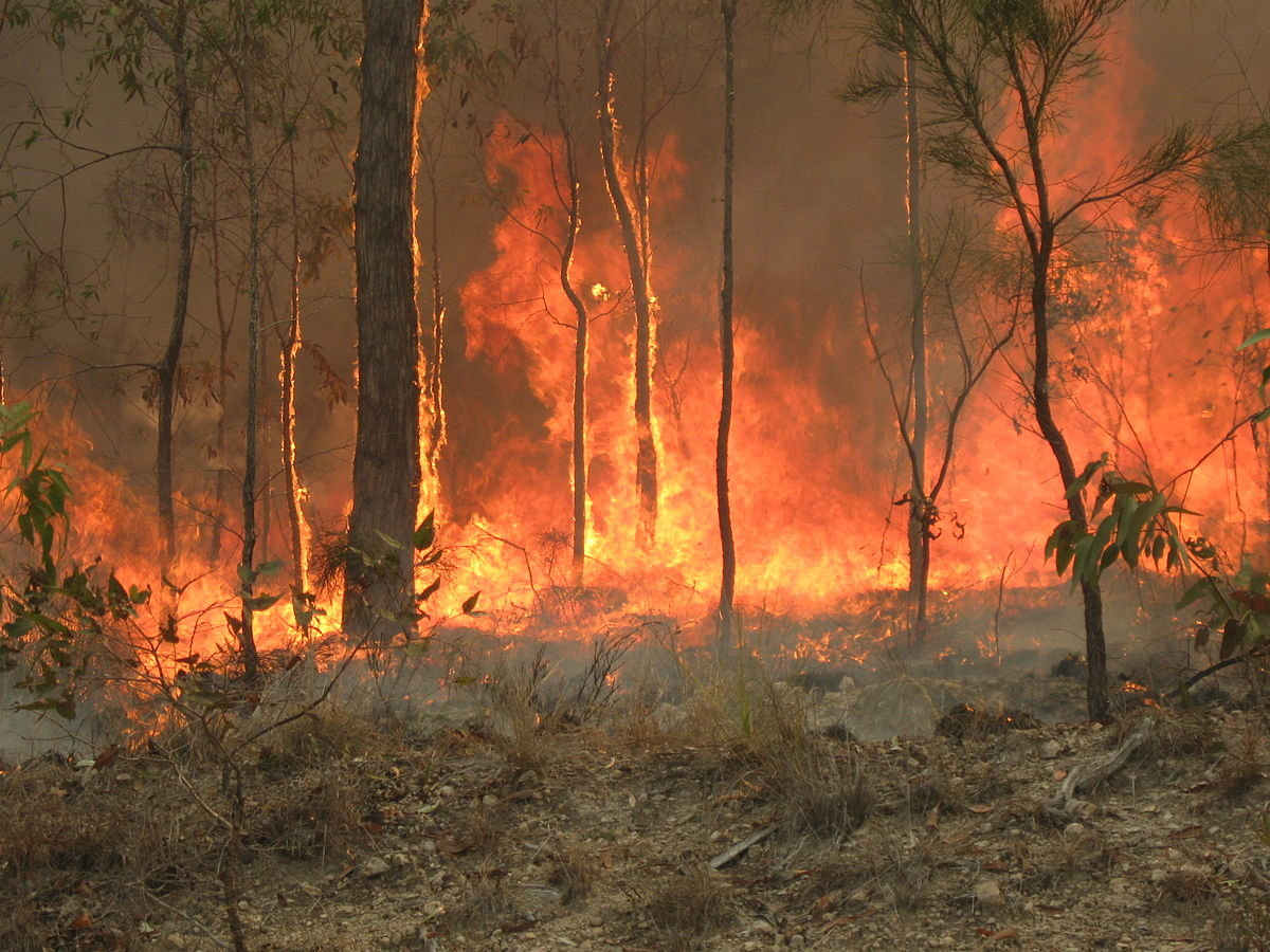 1200px-Bush_fire_at_Captain_Creek_central_Queensland_Australia..JPG