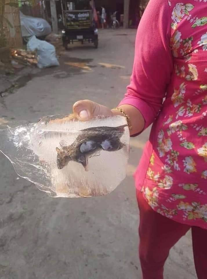 Rat in ice Cambodia.jpg